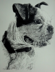 hubert-bowers-amsterdam-pet-portrait-dog1-pencil