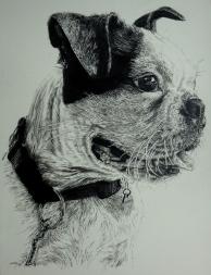 hubert-bowers-amsterdam-pet-portrait-dog1-pencil