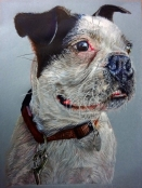 hubert-bowers-amsterdam-pet-portrait-dog2-crayon